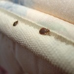 bed bug treatments , we can eradicate infested beds