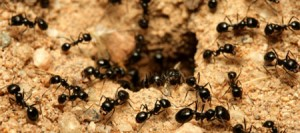 ants in the house and garden pest control for the dudley DY postcodes