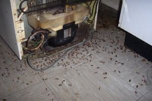 cockroach infestation control in dudley stourbridge